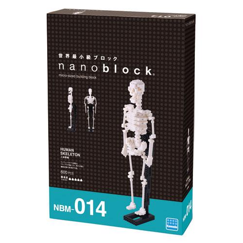 ™ - human skeleton, Skeleton