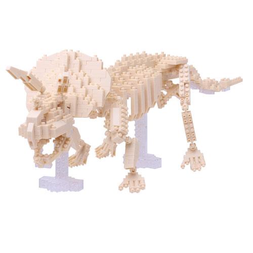 NBM 017 TriceratopsSkeleton